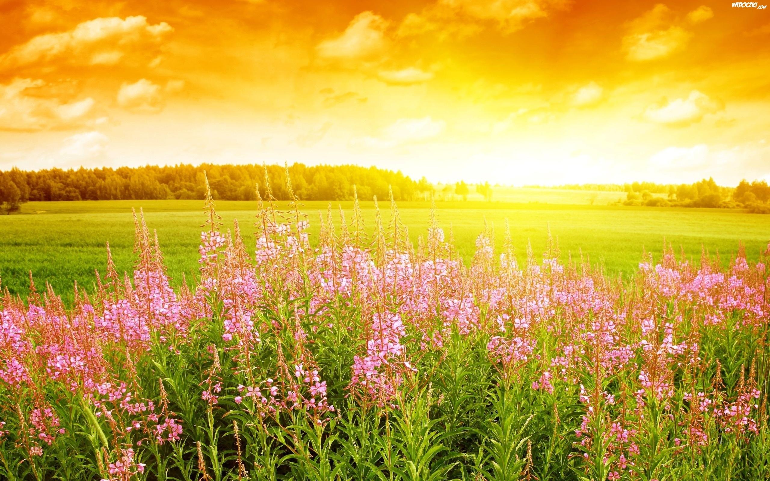 Znalezione obrazy dla zapytania łąka