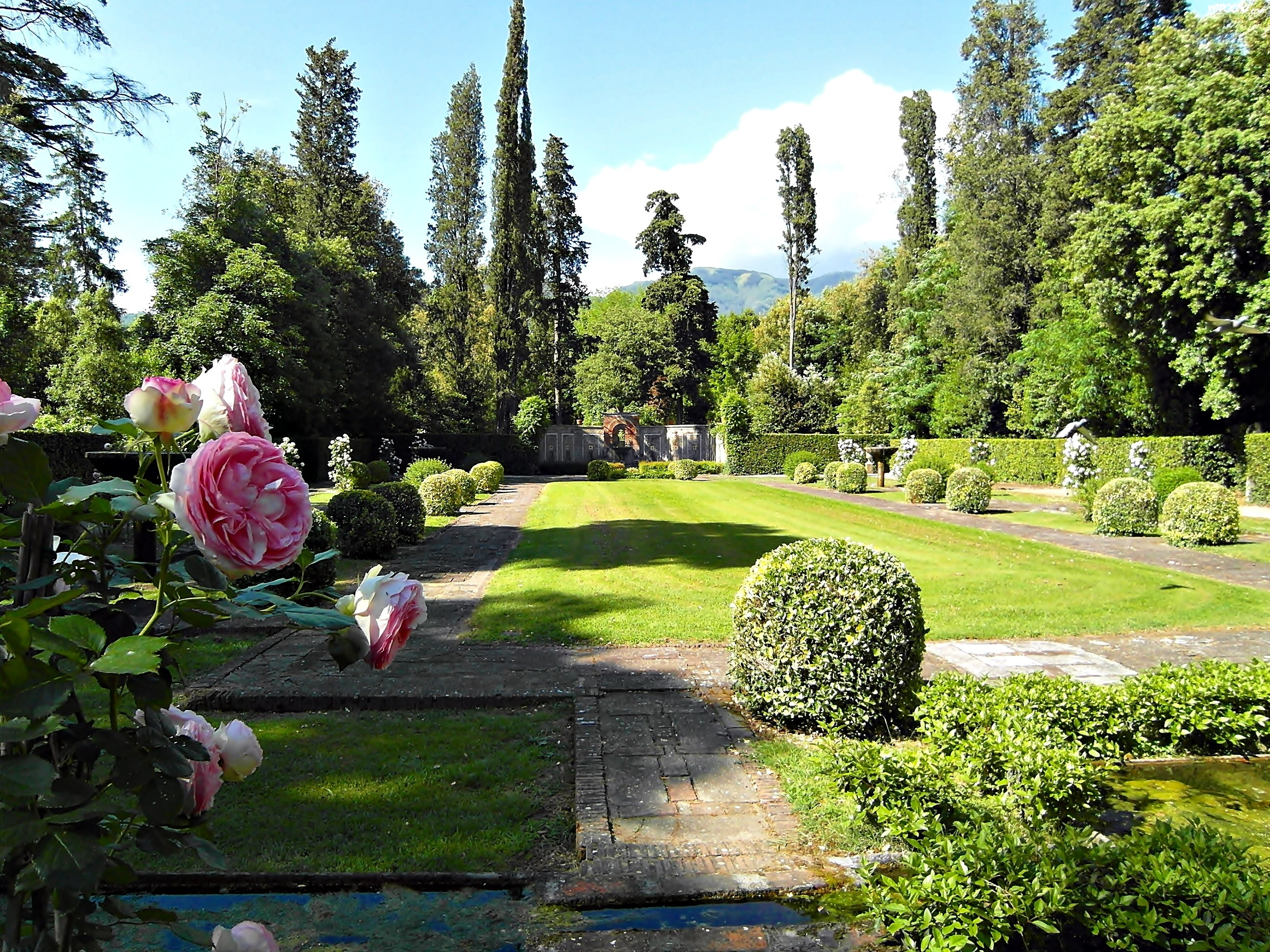 Ogród, Pałacowy, Krzewy, Drzewa, Róże